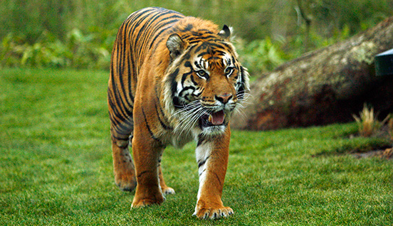 ZSL London Zoo Image